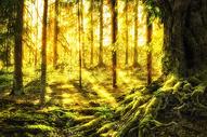 奇幻唯美森林400873981图片