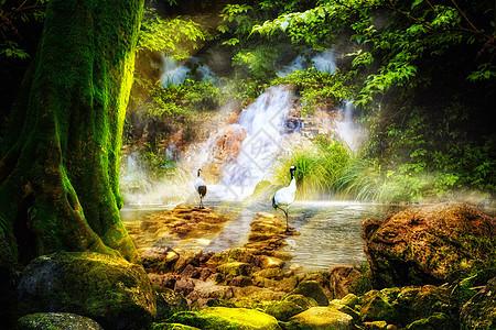 梦幻唯美森林图片