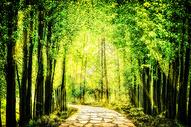 奇幻唯美森林400891548图片