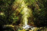奇幻唯美森林400893469图片