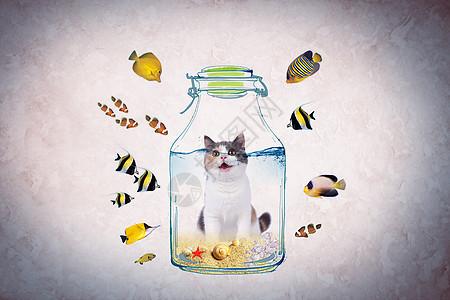 超现实猫与小鱼图片