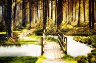 奇幻唯美森林400897500图片
