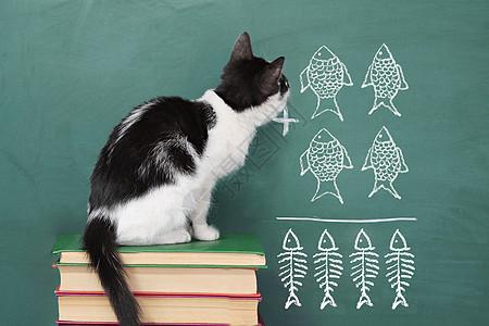 猫与算术图片