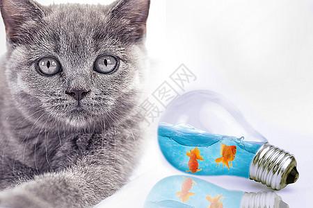 想吃鱼的猫图片
