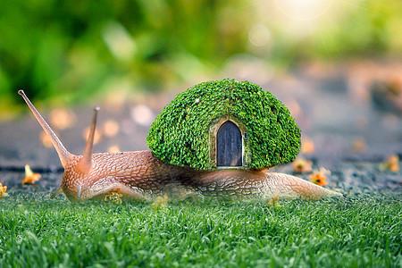 蜗牛小屋图片