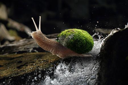 努力的小蜗牛图片