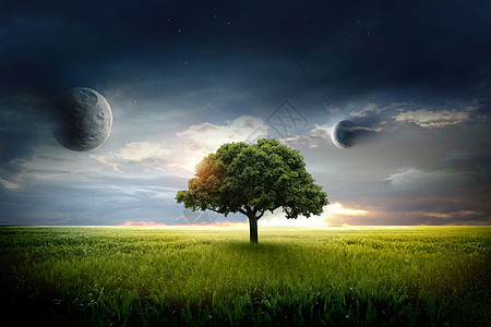 大树与星空图片