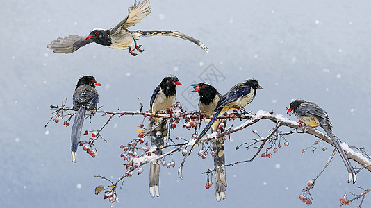 雪和鸟图片