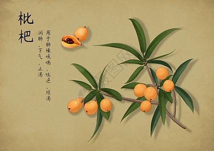 手绘中国风中药图片