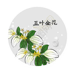 中草药插画图片