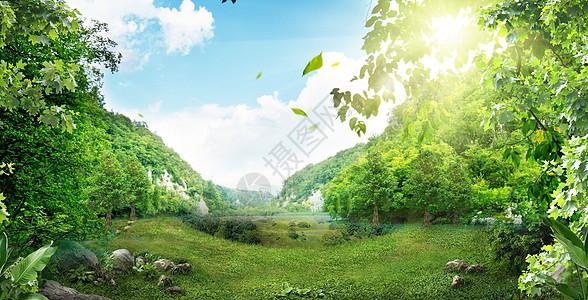 春天的森林图片
