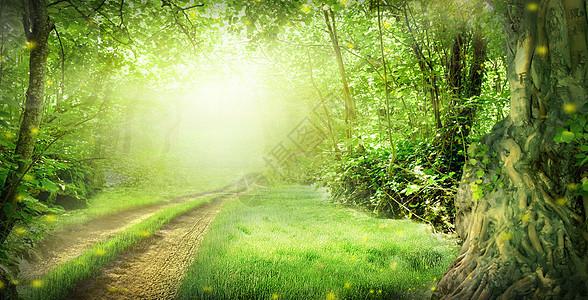 春天的梦幻森林图片
