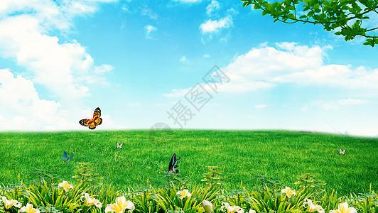 春天蝴蝶飞舞图片