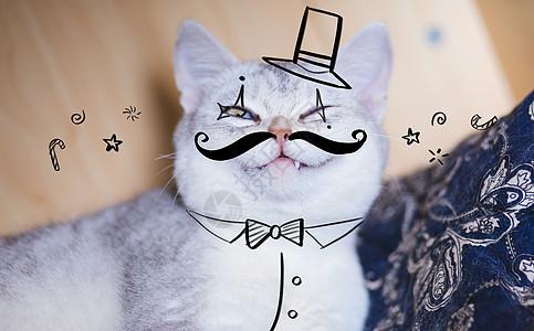 马戏团猫咪图片