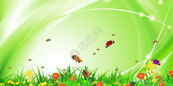 春天花卉图片