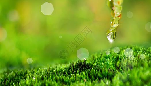 春天的植物图片