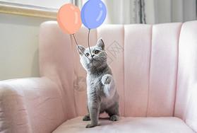 玩气球的猫咪图片