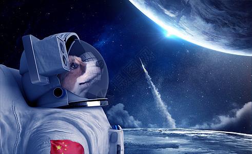 动物宇航员图片