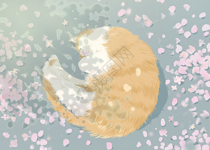 樱花树下的猫图片