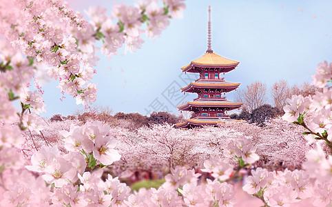 樱花盛开的春天图片