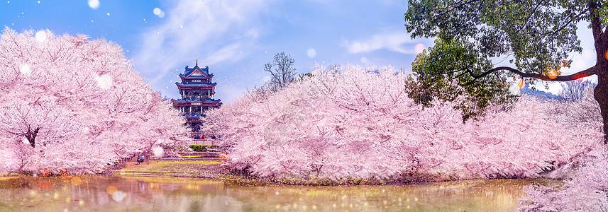 公园里的樱花图片