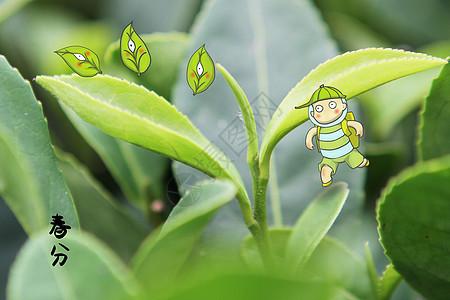 绿芽春分图片