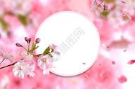 春天盛开的花朵图片