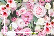 浪漫樱花场景图片