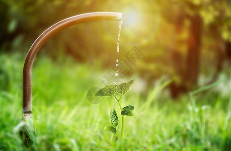 灌溉发芽图片