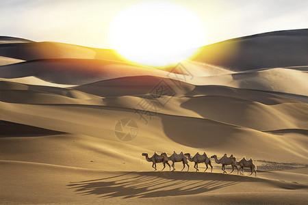 骏马奔驰图片