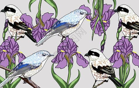 国风之鸢尾花与鸟儿图片