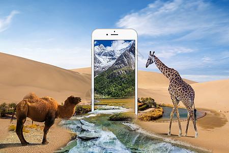 手机中的沙漠绿洲图片