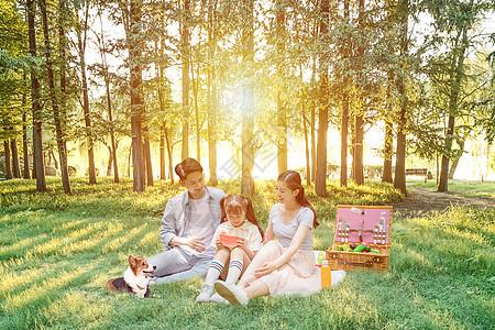 春日野餐图片