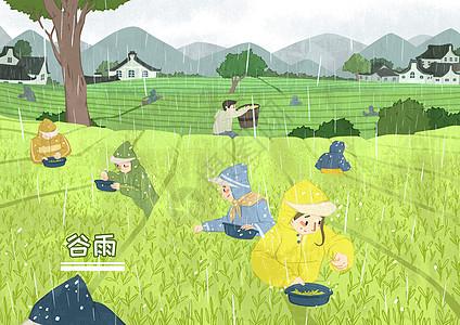 谷雨采茶图片