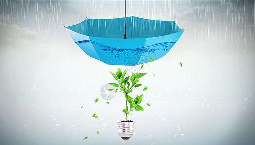 在雨伞庇护下的小树苗图片