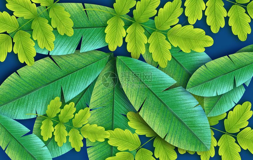 夏季树叶图片