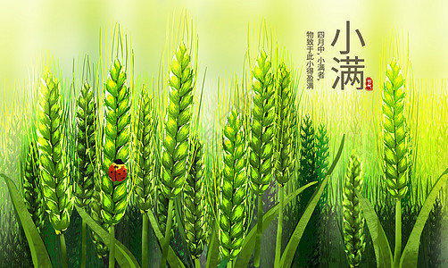 小满麦子图片