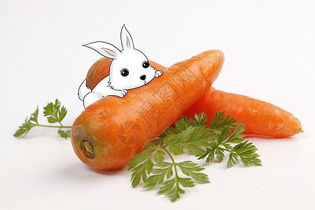 小兔子吃胡萝卜图片