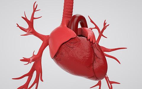 医学人体器官心脏图片