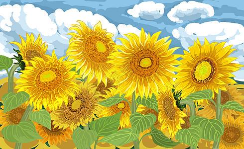 夏日向日葵图片
