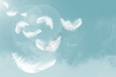 羽毛背景图片