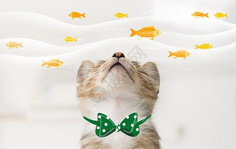猫和鱼图片