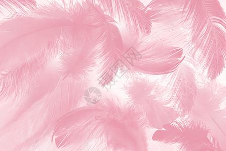 粉色羽毛背景图片