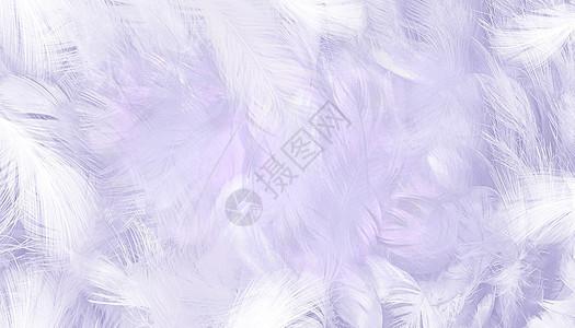 紫色羽毛背景图片