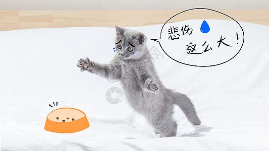猫咪没猫粮悲伤那么大图片