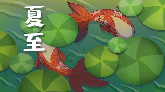 24节气夏至鱼游浅水创意插画图片