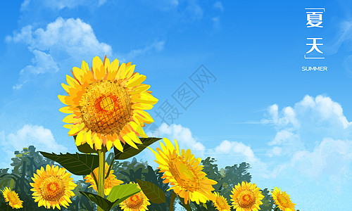 夏天向日葵��D片