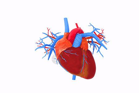 3d人体器官模型图片