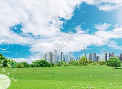 清新草�w地背景
