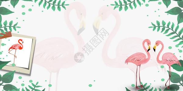 ins风叶子火烈鸟图片